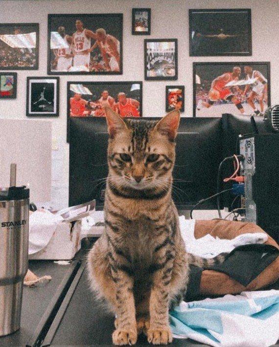 眾星實業吉祥物貓貓